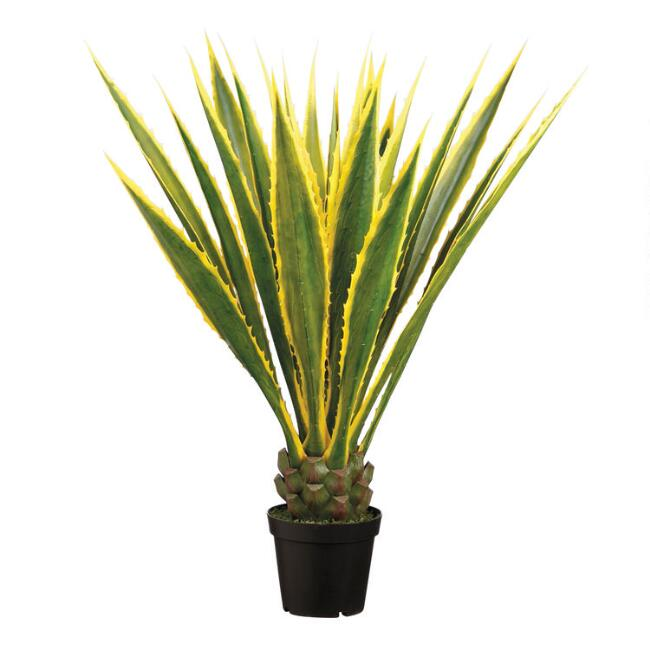 Faux Variegated Agave Americana Plant