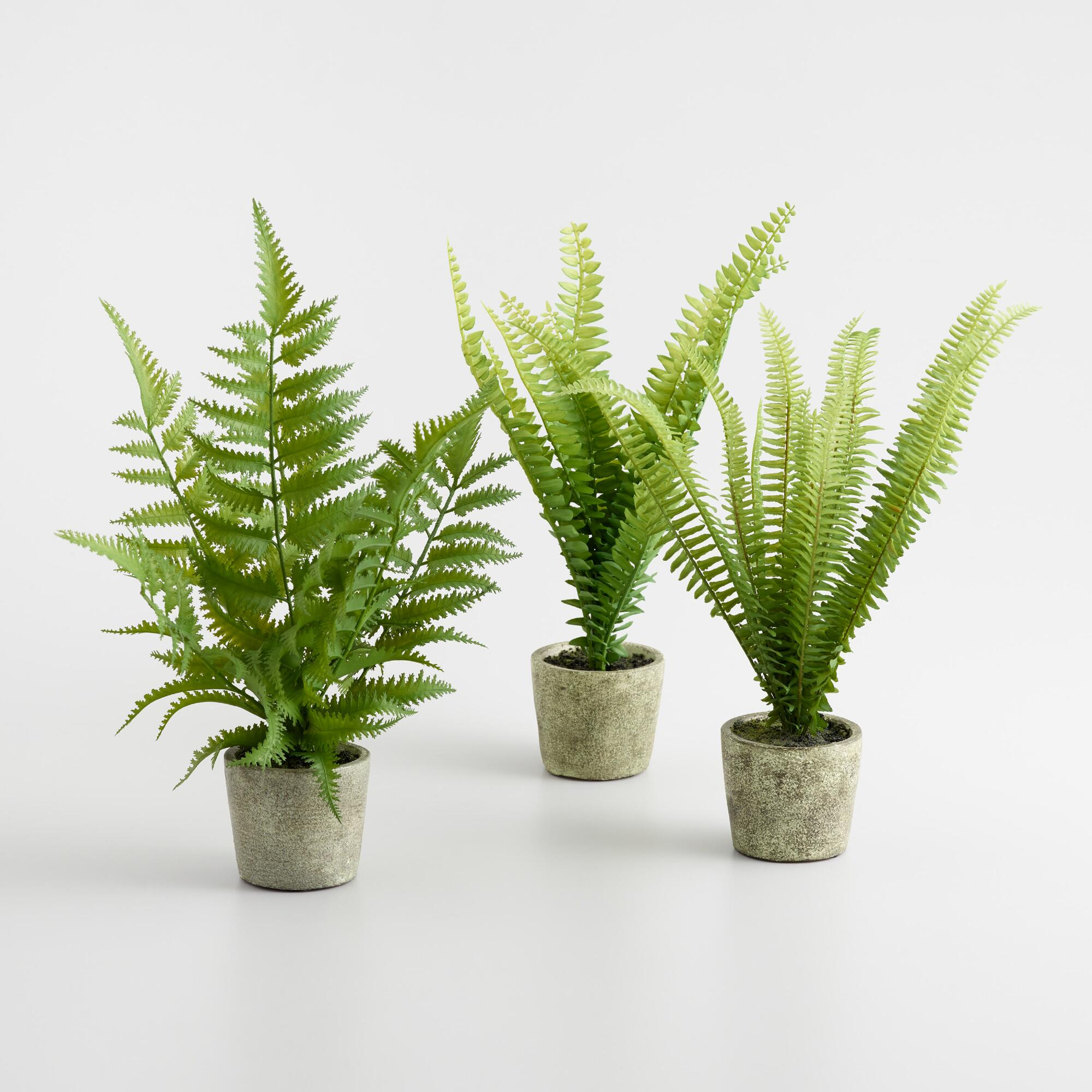Mini Faux Ferns in Gray Pots Set of 3 by World Market