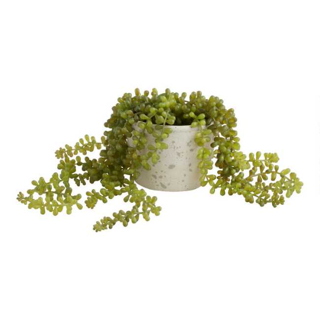 Shop Faux String of Pearls Plant in Textured Pot from World Market on Openhaus