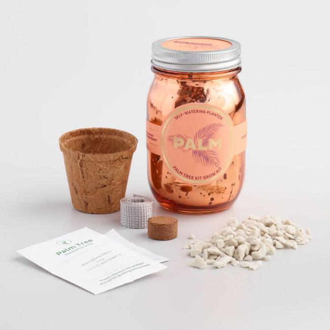 Modern Sprout Indoor Palm Tree Mason Jar Growing Kit