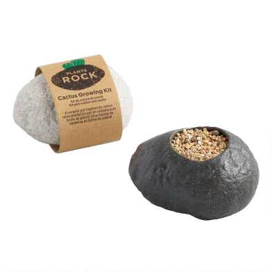 Cactus Ceramic Rock Planter Grow Kit