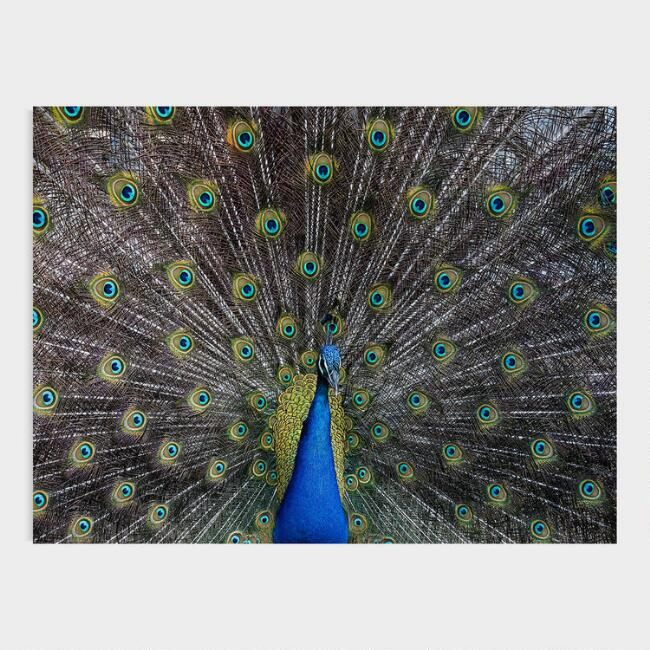 Peacock Fan Canvas Wall Art