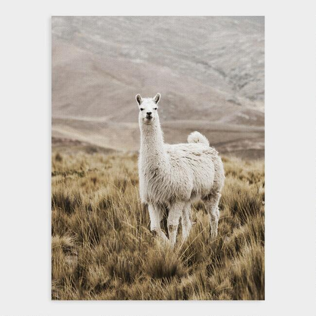 Llama Drama Canvas Wall Art