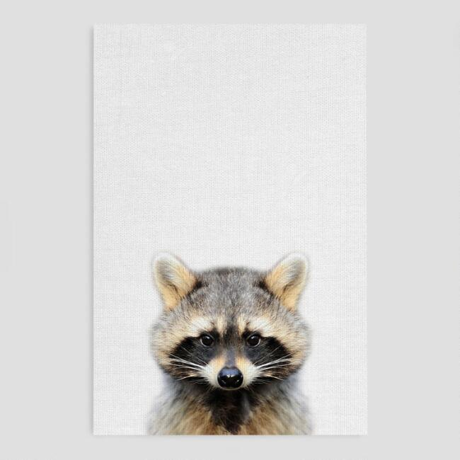 Raccoon Stare Canvas Print Wall Art