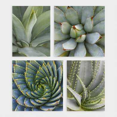 Succulents By Robin Hanson Canvas Wall Art 4 Piece
