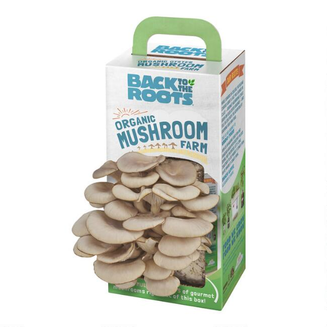 Back to the Roots Organic Oyster Mushroom Grow Kit