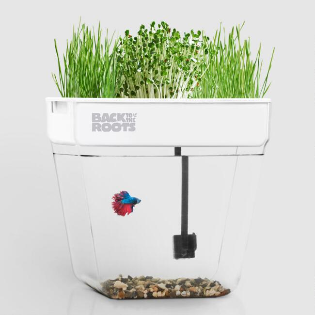 Back to the Roots Indoor Water Garden Fish Tank Kit