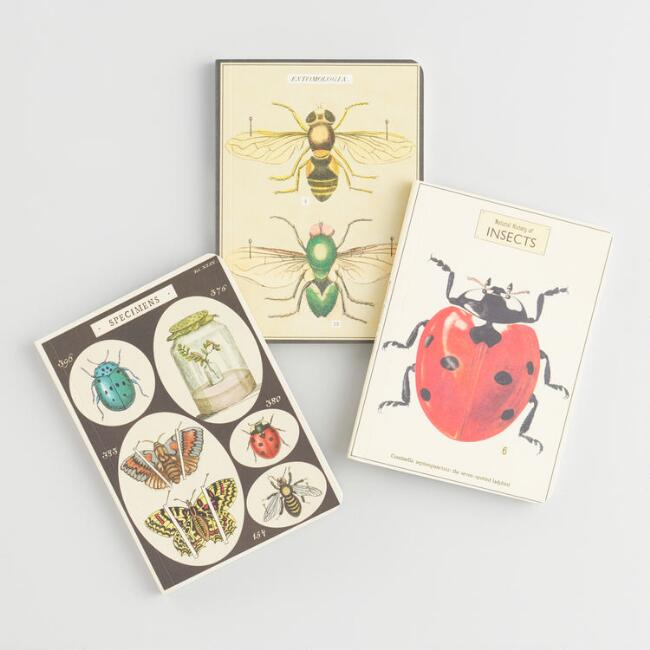 Mini Insect Notebooks Set of 3