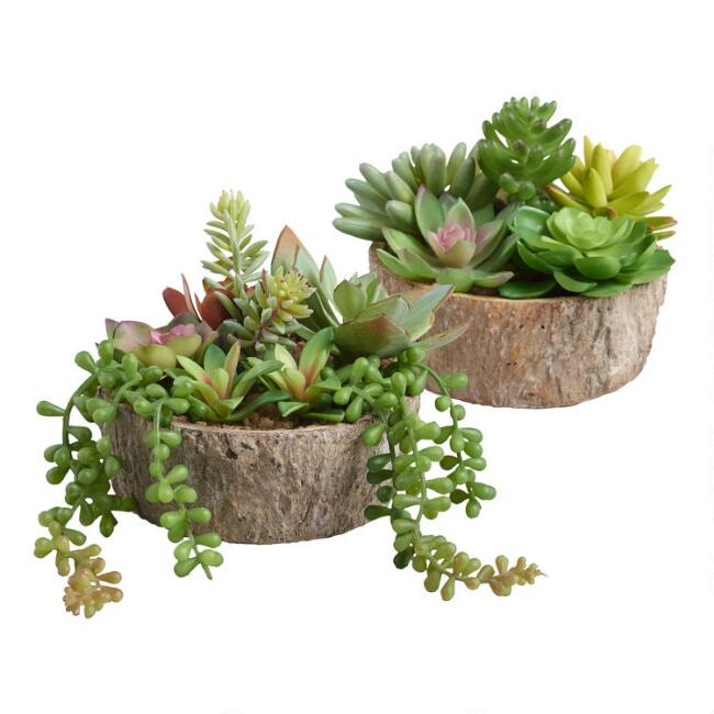 Faux Succulents in Log Slices Set of 2