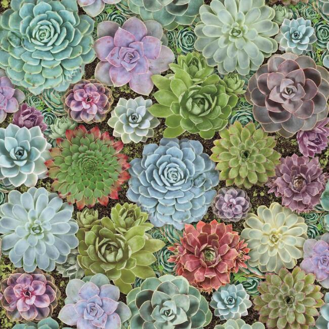 Succulent Garden Peel And Stick Wallpaper