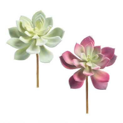 Flocked Faux Echeveria Stems Set of 2