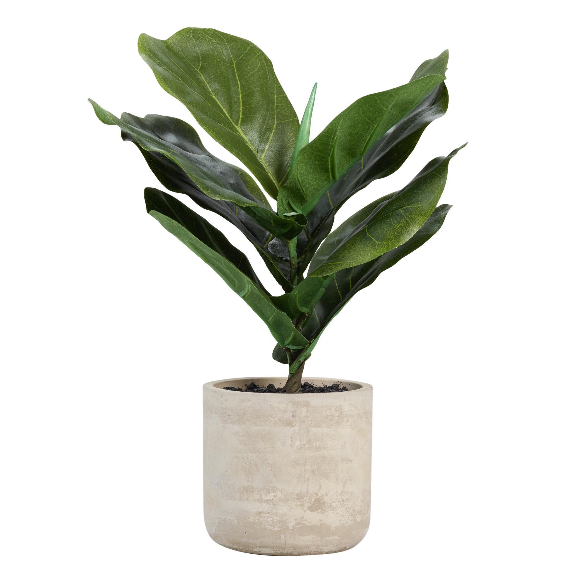 Faux Fiddle Leaf Fig Plant in Cement Pot by World Market