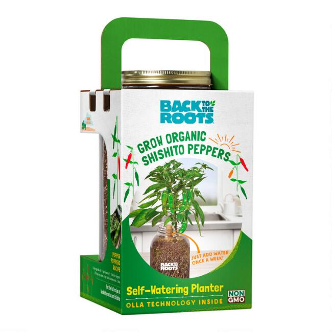 Back To The Roots Organic Shishito Pepper Grow Kit