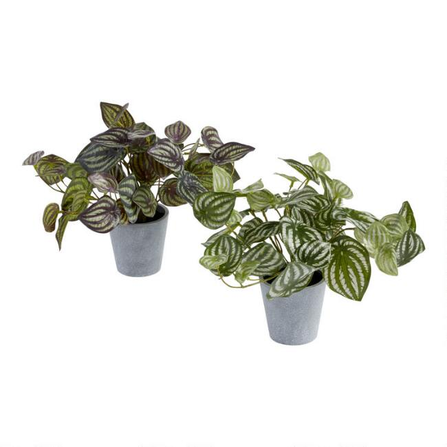 Faux Peperomia Plants Set of 2
