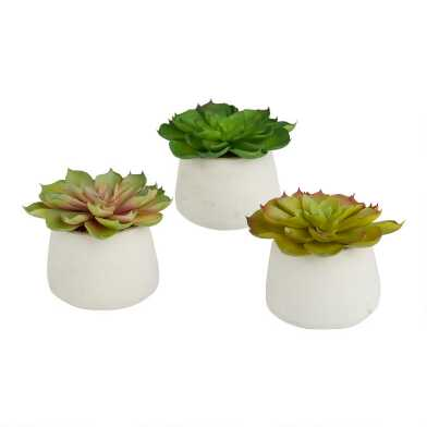 Faux Echeveria In Round Cement Pots Set Of 3