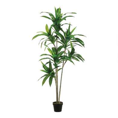 Faux Dracaena Tree with 3 Trunks
