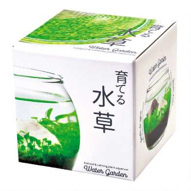 Noted Water Garden Glass Plant Aquarium Set