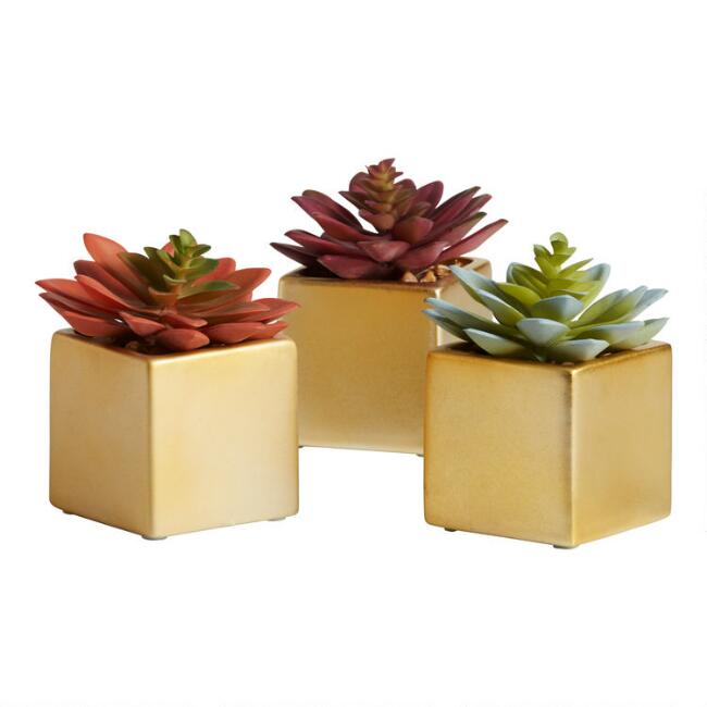 Faux Echeverias in Square Gold Pots Set of 3