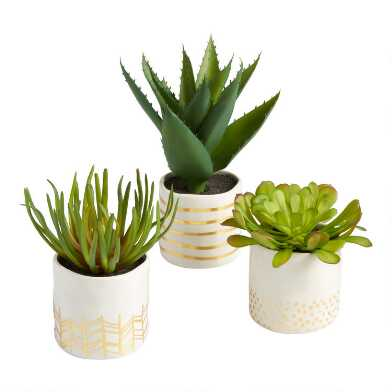 Faux Succulents in Gold and White Ceramic Pots Set of 3