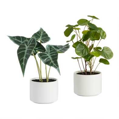 Mini Faux Tropical Plants in Ceramic Pots Set of 2