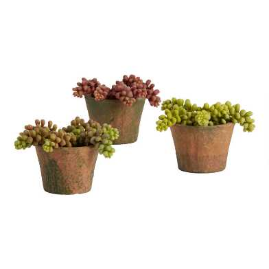 Faux Donkey Tail Succulents in Terracotta Pots Set of 3