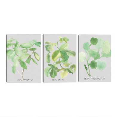 Ficus and Pilea by Katrien Soeffers Canvas Wall Art 3 Piece